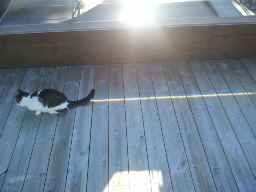 Nyan Cat IRL