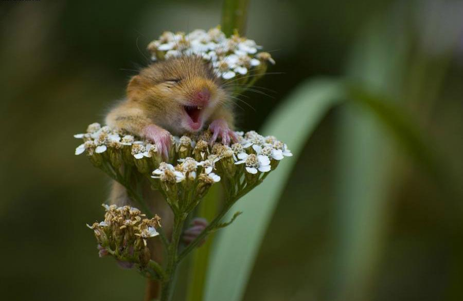 happy critter in flower
