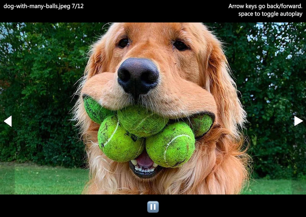 Slide show showing a picture of a dog with a lot of tennis balls.